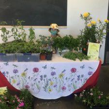 Davanna's Herb Garden